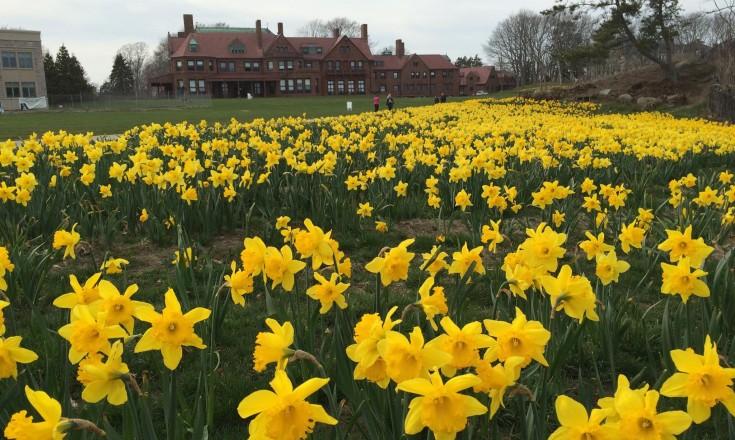 Newport Daffodil Days Festival