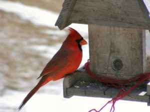 Bird Feeding Basics @ Norman Bird Sanctuary |  |  |
