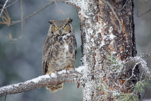 January Owl Prowl @ Norman Bird Sanctuary |  |  |