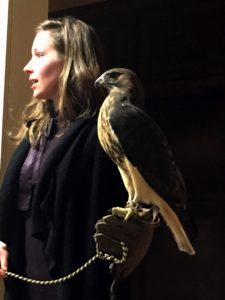 Evening with the Raptors @ Norman Bird Sanctuary |  |  |