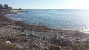 Beach Cleanup at Cliff Walk (Marine Avenue) @ Cliff Walk (Marine Avenue) |  |  |
