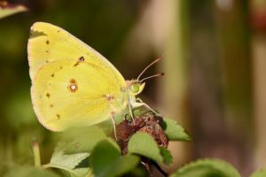 Butterfly Count at Ballard Park @ Ballard Park |  |  |