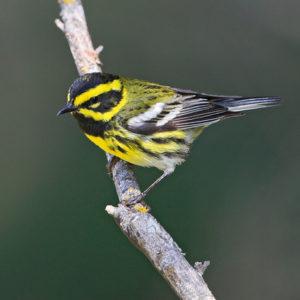 Norman Bird Sanctuary's Migration Magic Lecture @ Norman Bird Sanctuary        